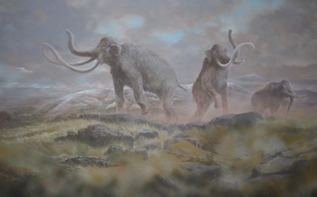 Columbian Mammoth by Stev Ominski