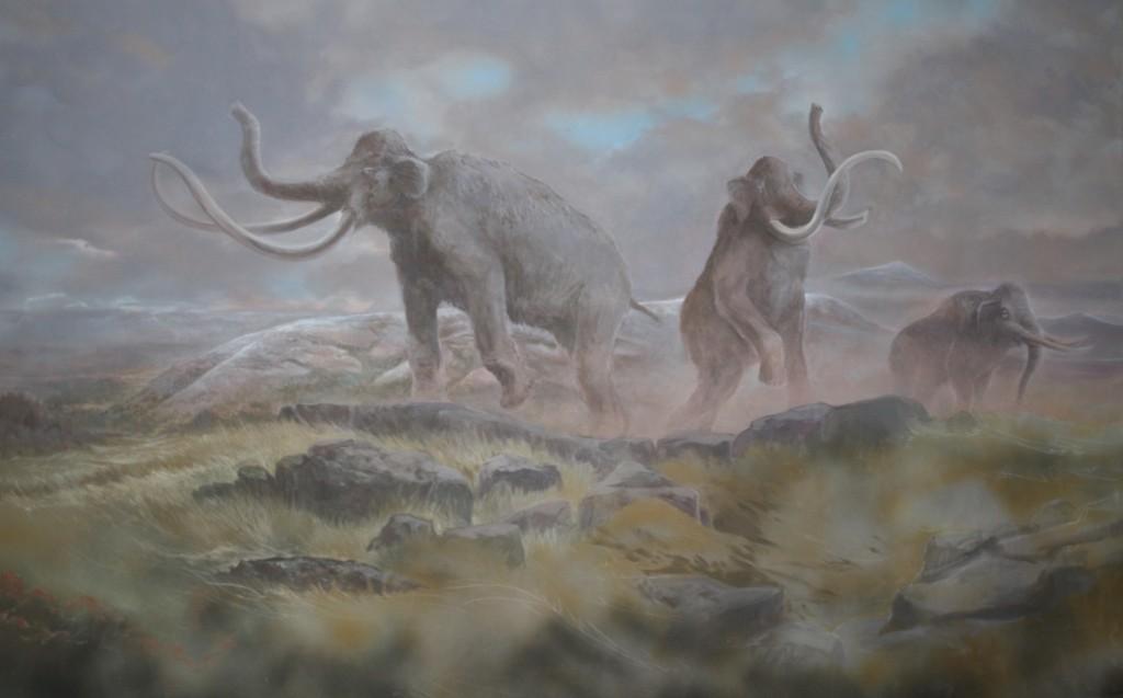 Columbian Mammoth by Stev Ominski