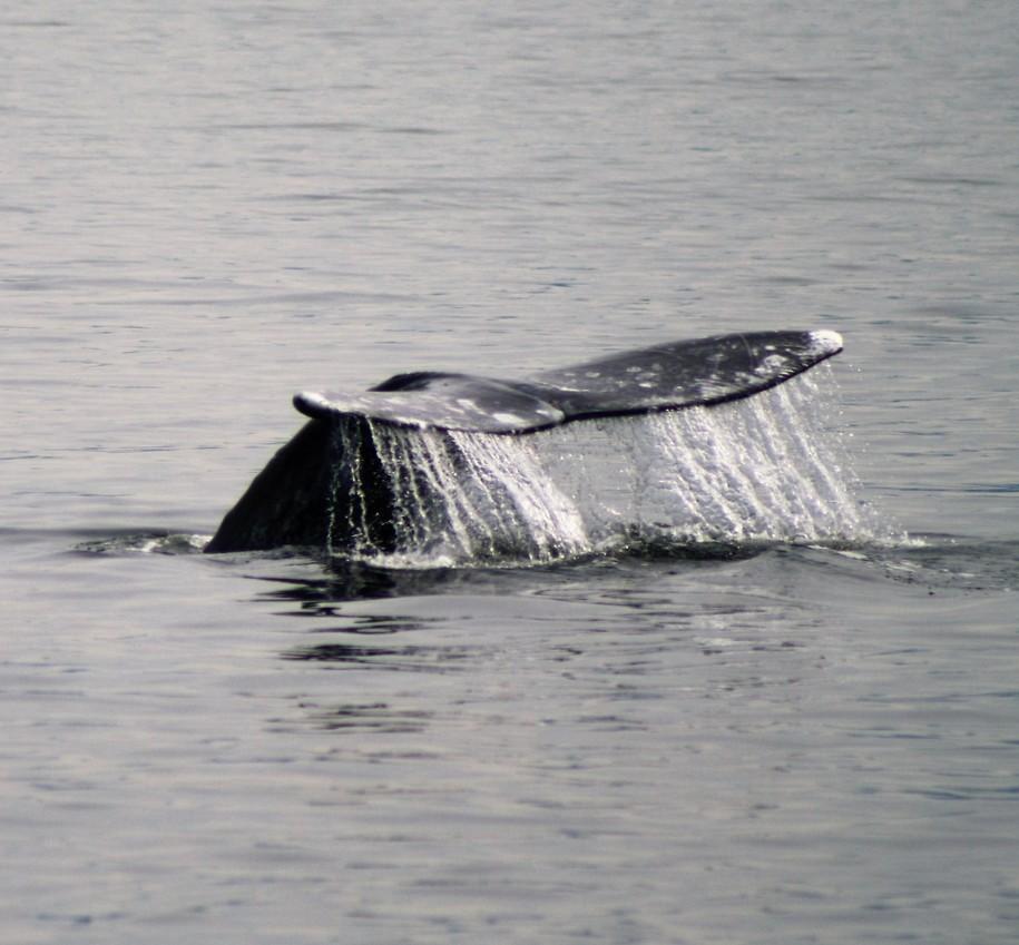 WhaleRonK