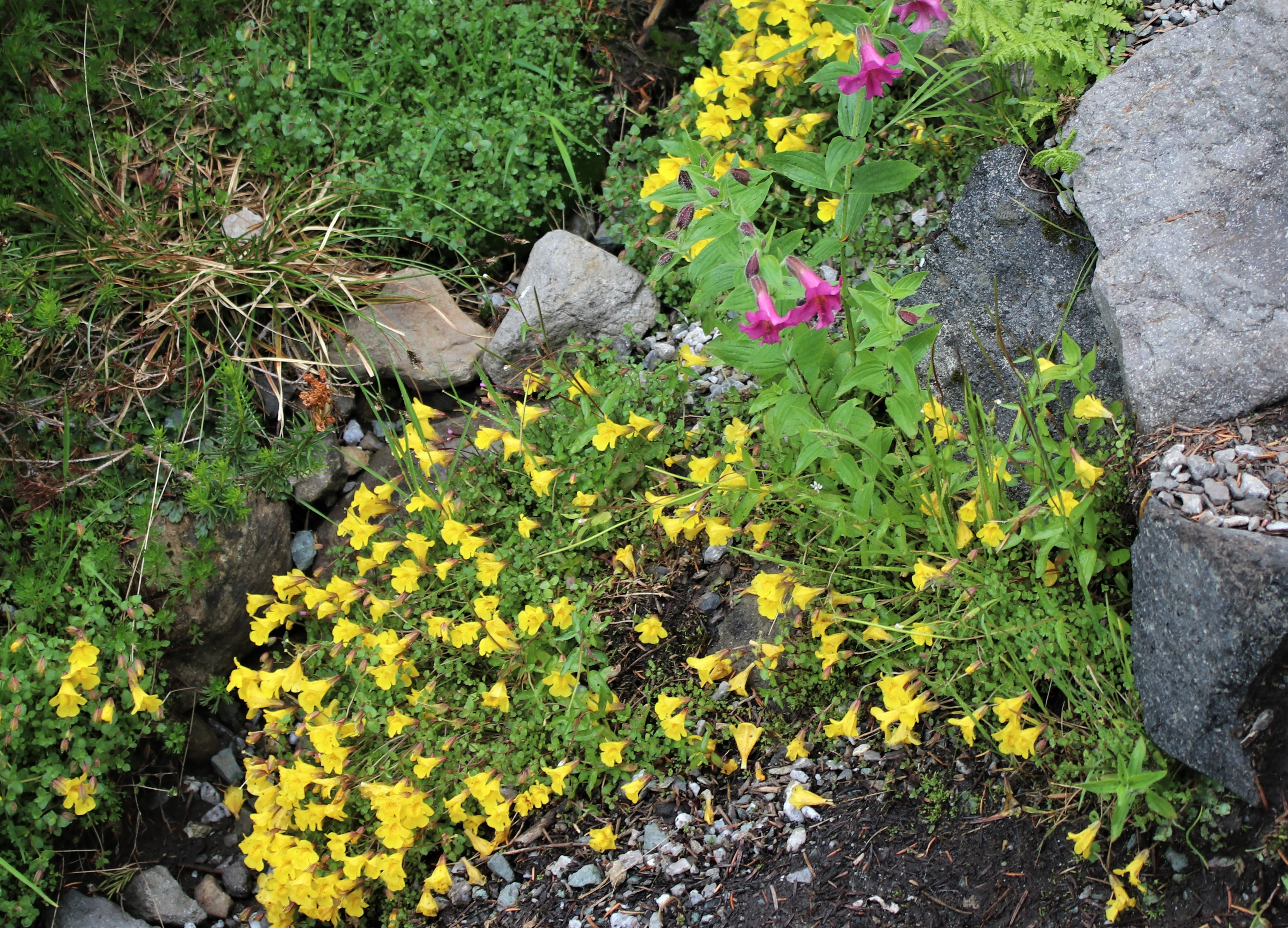 August Wildflowers On The Mountain Motley Moose